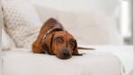 Repartidora se roba un perro de la entrada de una casa e intenta venderlo por Internet - Noticias de cámaras de seguridad