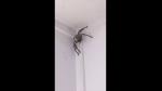 Pide ayuda para sacar araña gigante de su casa e internautas le dan peculiar consejo - Noticias de australia