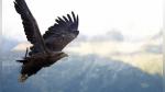 Un halcón intentó arrebatarle a alguien un bocadillo volando a toda velocidad - Noticias de buenos aires