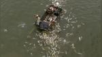 La cruel verdad detrás del video donde se ve una avalancha de peces saltando de un lago - Noticias de descarga eléctrica