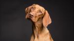 Perro queda hipnotizado al ver su reflejo y su reacción causa furor en Internet - Noticias de video destacado