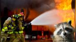 Bomberos ayudan a mapaches a escapar de incendio usando una insólita técnica - Noticias de video destacado