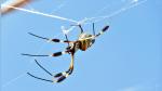 Mujer capta el espeluznante instante en el que araña atrapa a murciélago en sus redes - Noticias de murciélagos