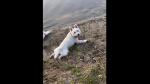 Lleva a jugar a sus perros a estanque y horas después mueren misteriosamente - Noticias de perros