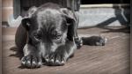 Un perro ayuda a un ave atrapada en una casa a salir sana y salva - Noticias de video destacado