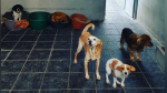 La emotiva historia de Cuco, el perro que murió el mismo día que su dueña - Noticias de gatos