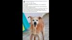 La emotiva historia de Cuco, el perro que murió el mismo día que su dueña - Noticias de produce