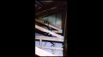 Escucha extraños ruidos en el techo de su casa, revisa y descubre peculiar pelea - Noticias de animales