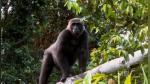 El emocionante reencuentro después de 5 años de un rescatista y gorila al que crió cuando era bebé - Noticias de animales
