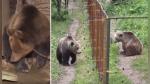 Oso que pasó aislado casi toda su vida conoció por primera vez a otra de su misma especie - Noticias de animales