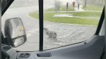 El momento en que un cocodrilo gigante obliga a parar el tráfico en una carretera de USA - Noticias de animales