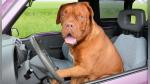 Los divertidos intentos de un joven por abrir el auto del que fue dejado afuera por su perro - Noticias de dentista