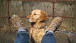 Paseador de perros sufre la humillación máxima después de sacar a tres canes a dar una vuelta - Noticias de dentista