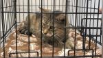 Una mujer encuentra a su gato 11 años después de que se perdiera - Noticias de prevención