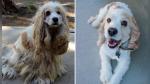 El antes y después de una perrita que fue abandonada a su suerte en un desierto - Noticias de resiliencia