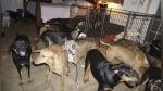 Huracán Dorian: mujer acoge a 97 perros en su casa para protegerlos del temporal - Noticias de inundación