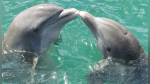 El maravilloso gesto de agradecimiento de un delfín hacia unos pescadores que ayudaron a su cría - Noticias de italia