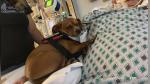 """""""Benny"""", el perro que se negó a abandonar a su dueño en su último día de vida - Noticias de huracanes"""