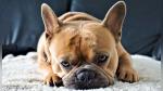 Le pregunta a su perro cómo estuvo su día y este le responde con tremendo berrinche - Noticias de divertido
