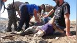 La titánica misión para rescatar a una burra que quedó atrapada 3 años en un islote - Noticias de ves