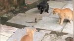 Cobra es captada encarando a cuatro gatos y desenlace sorprende a miles de internautas - Noticias de video