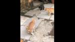 Cobra es captada encarando a cuatro gatos y desenlace sorprende a miles de internautas - Noticias de auto