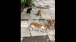 Cobra es captada encarando a cuatro gatos y desenlace sorprende a miles de internautas - Noticias de viral
