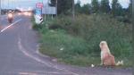 Perro se reencuentra con sus dueños tras esperar 4 años al lado de una carretera - Noticias de tailandia