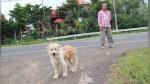 Perro se reencuentra con sus dueños tras esperar 4 años al lado de una carretera - Noticias de destinos