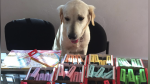 Scott, el perro con displasia que 'vende' marcadores para pagar sus medicamentos - Noticias de médicos