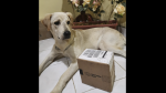 Scott, el perro con displasia que 'vende' marcadores para pagar sus medicamentos - Noticias de viral