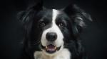Una perrita esboza una sonrisa cada vez que quiere un bocadillo y se vuelve tendencia - Noticias de viral