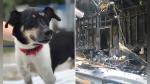 Heroico perro se sacrifica para salvar a toda su familia de un incendio - Noticias de viral