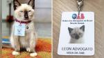 Se quejaban por gato callejero que se coló en estudio de abogados, así que lo contrataron - Noticias de plástico