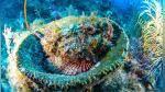 #SuperCoralPlay, el reto en redes sociales para salvar los corales de Florida - Noticias de campo mar